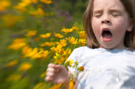 Effective Cures For Hayfever
